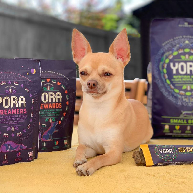 Gizmo the chihuahua with his Yora pet food